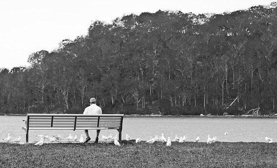 Man, Bench, Gulls, Trees, Water, Park