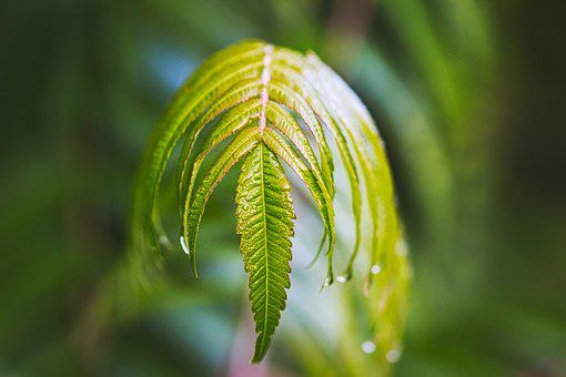 Plant, Morgentau, Autumn, Nature, Raindrop