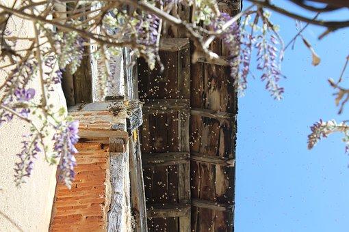 Castle, Mauriac, Occitania, Bees, Queen, Nest, Sky