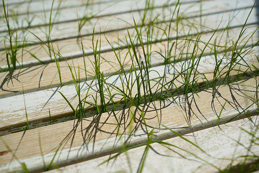 Grass, Plant, Wood-fibre Boards, Wood, Old, Texture