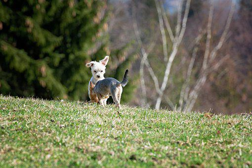 Dogs, Out, Meadow, Play, Together, Small Dogs, Animal