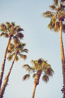 Beach, Palms, Paradise, Tropical, Marina, Summer