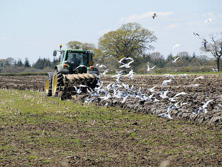Ploughing, Agriculture, Tractor, Farmland, Field