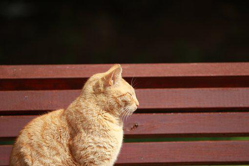 Cat, Bench, Park, Sun, Relaxing, Outdoor