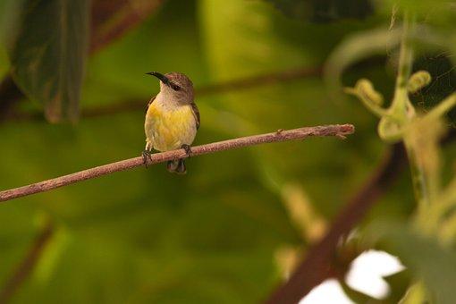 Bird, Sparrow, Green, Innocent, Pet, Attractive