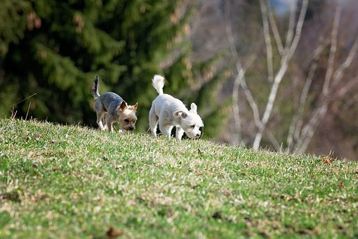 Dogs, Out, Meadow, Grass, Spout, Freewheel, Two