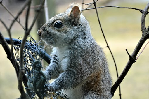 Squirrel, Young, Furry, Staring, Gray, Cute, Eating