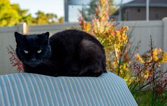 Black Cat, Green Eyes, Feral, Rescue, Superstition, Pet