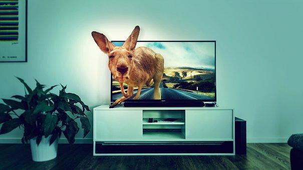 Interior, Tv, Kangaroo, Road, Room, Entertainment