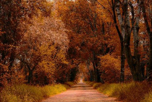 Trail, Path, Hiking, Walk, Nature, Landscape, Trees