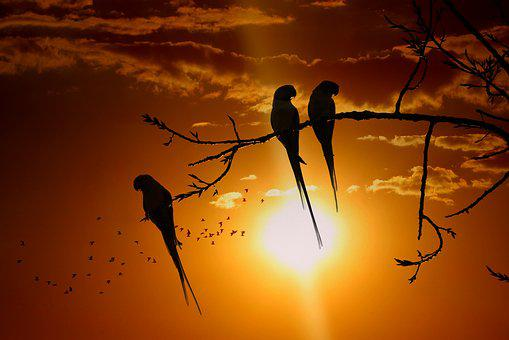 Parakeet, Bird, Animal, Perched, Branch, Silhouette