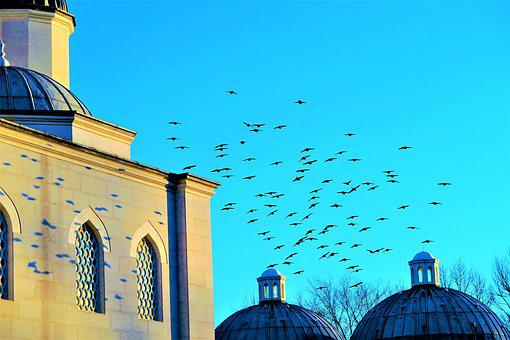 Birds, Nature, Cami, Animal, Blue, Flying, Sky, Domes