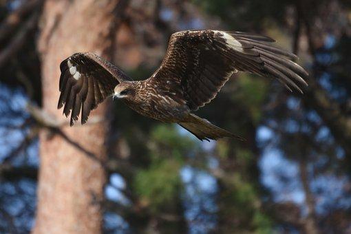 Animal, Forest, Wood, Pine Trees, Bird, Wild Birds