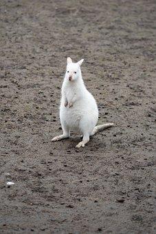 Walibi, White, Animal, Albino, Nature, Zoo