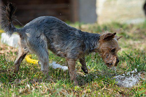 Dog, Out, Water, Play, Playful, Garden, Meadow