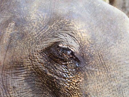 Eye, Elephant, Wrinkles, Hide, Grey, Tough, Head, Large