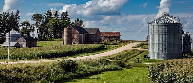 Iowa, Farm, Country Road, Corn, Cornfield, Fields