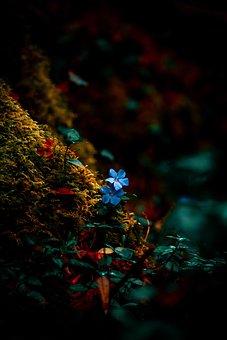 Flower, Nature, Green, Plants, Leaves, Plant