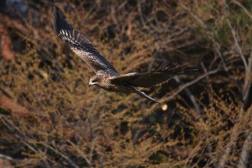 Animal, Forest, Wood, Bird, Wild Birds, Raptor, Video