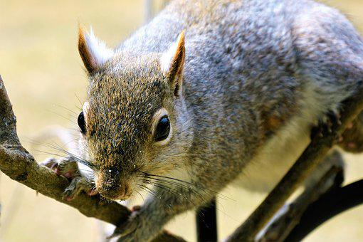 Squirrel, Young, Staring, Perched, Eating, Furry, Cute