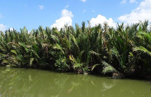 Golpatta, Nipa Fruticans, Palm, Swamp, Mangroves