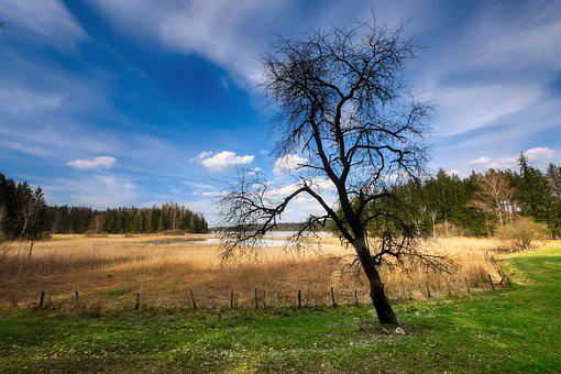 Tree, Glade, Forest, Landscape, Meadow, Reed, Light