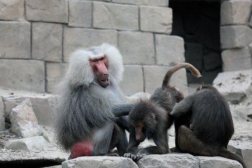 Emmen, Zoo, Monkey, Animal, Netherlands