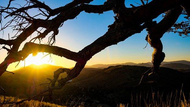 Fort Davis, Mountains, Davis Mountains, Tree