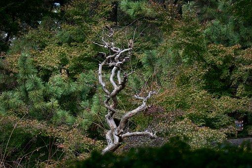 Tokyo, Park, Tree, Japanese, Autumn, Japan, Asia