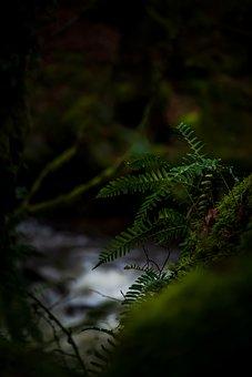 Fern, Nature, Green, Plants, Leaves, Plant, Environment
