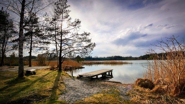 Lake, Tree, Reed, Backlighting, Web, Bank, Landscape