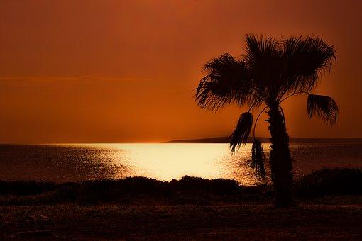 Palm Tree, Sunset, Sea, Ocean, Island, Romantic, Exotic