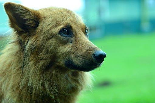 Dog, Sad, Animal, Animals, Pet, Cute, Portrait, Puppy