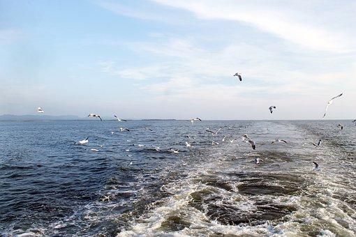 Sea, Bay Of Bengal, Travel, Ocean, Water, Birds, Sky