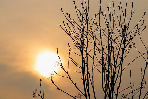 Sol, Sunset, Clouds, Sky, Wood, Branches, Contrast