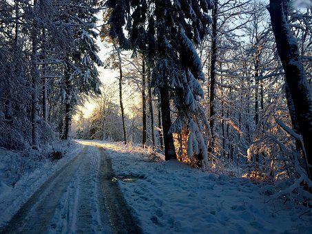 Forest Path, Sunrise, Winter, Light, Promenade