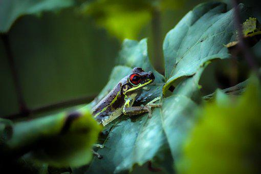 Frog, Toad, Reptile, Animals, Pond, Amphibians, Green