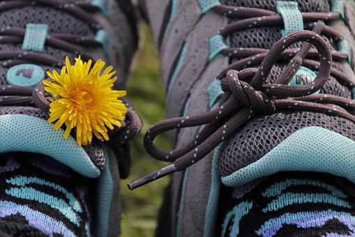 Two, Sports Shoes, Dandelion, Plant, Trainers, Shoes