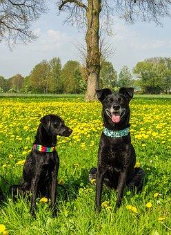 Dog, Black, Pet, Animal, Trust, Cute, Portrait