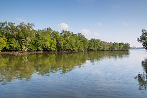 Singapore, Sungei Buloh, Mangrove, Coast, Reserve