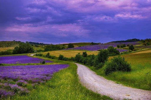 Fields, Colors, Nature, Lavender, Mood, Color, Colorful