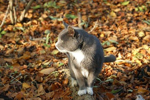 Cat, Picnic, Natural, Expensive, Denmark, Silence