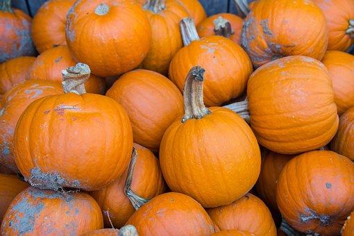 Pumpkins, Farm, Autumn, Fall, Orange, Harvest