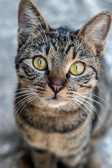 Cat, Kitty, Animal, Kitten, Pet, Feline, Adorable, Cute