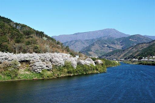 Seomjin, Cherry Enjoy, Spring, Flower Road