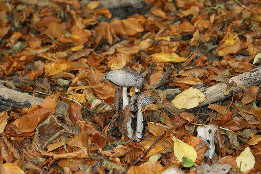 Mushrooms, Picnic, Natural, Forest, Forest Floor