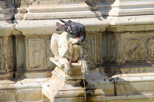 Pigeon, Fountain, Statue, Sculpture, Monument