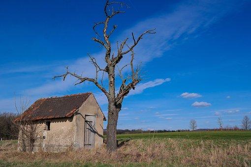 Hut, Tree, Kahl, Landscape, Nature, Sky, Meadow