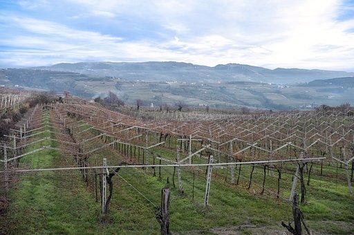 Italy, Verona, Valpolicella, Wine, Vineyard