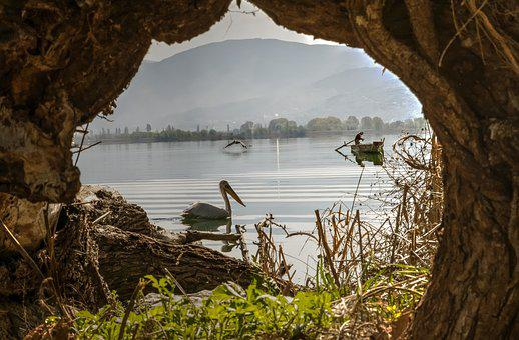 Lake, Tree, Pelican, Birds, Fishers, Nature, Water